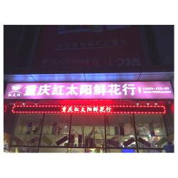 重庆红太阳花行